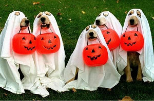 Happy Halloween Quotes,dog,bitches ,costumes,idea,images,sms,wishes ...
