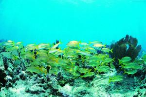 Life Underwater Wallpapers