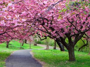 And Spring arose on the garden fair,