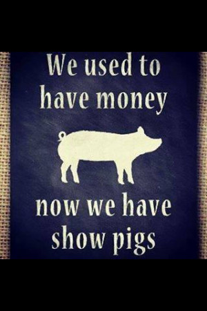 Love my Show Pigs..