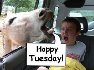 Funny Happy Tuesday – Graphic For Fun With Orkut Friends