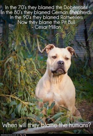 pitbull | Tumblr | We Heart It