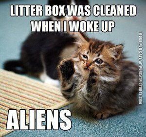 litter box was cleaned aliens cat