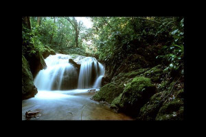 Quotes About the Amazon Rainforest