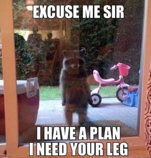 Excuse me sir I have a plan I need your leg – Rocket in real life