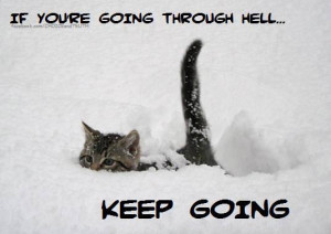 ... kitten walks through deep snow in this inspirational picture quote
