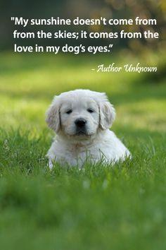 Pet Quotes on Pinterest