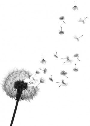 dandelion+tattoo+designs+and+meaning56