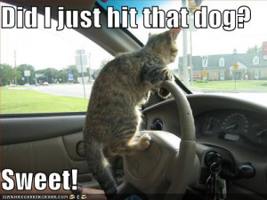 Funny dogs and cats, funny cats hd, funny cats and dogs farting, cats ...