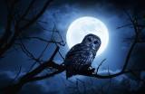 More men than women consider themselves night owls, and men sleep less ...