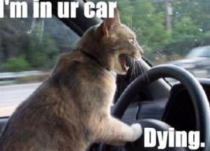 Hilarious Cat With Gun Quotes Quotesgram