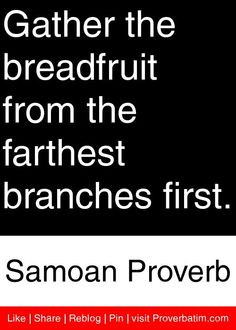 ... from the farthest branches first. - Samoan Proverb #proverbs #quotes