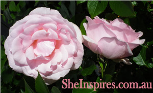 Inspiring Flowers and Inspiring quotes Photography by Belinda Stinson