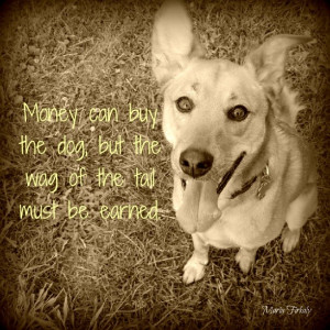... County Humane Society at 6months old in 2006 ♥ #dog #dogs #sayings