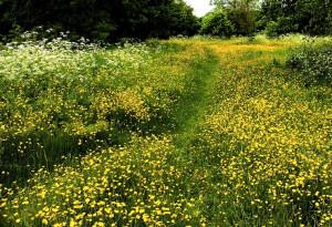 Top Ten Princess Bride Quotes Buttercup Field