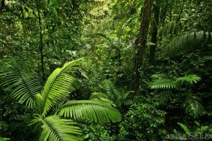Tropical Rain Forest Climate Zone