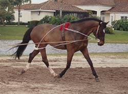 Discuss Is my mare over-weight, or just right? at the Horse Health ...
