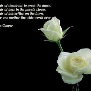 White Rose Pictures with Love Quotes