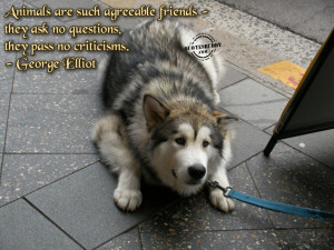 ... Quotes About Happiness » Animal Quotes With Funny Pose Of The Dog In