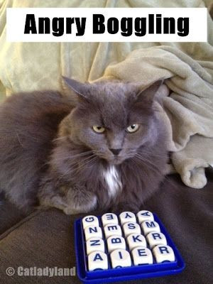 Catladyland: Cats are Funny: My Cat is a Sore Loser