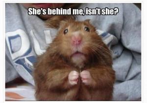 Scared little hamster