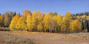 Winding Countryroad Foliage
