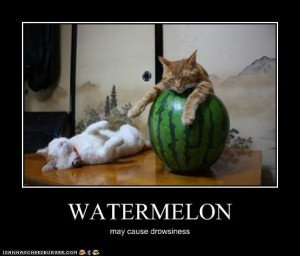 even a watermelons is national watermelon day the world post