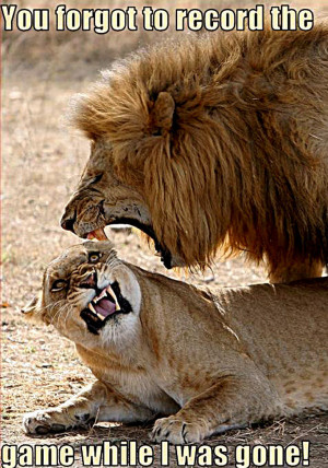 Lion and Lioness Memes
