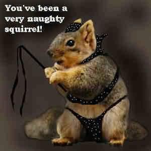 Funny Squirrel (24)