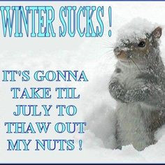 hate snow yahoo search results more funny sayings squirrels funny ...
