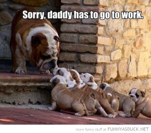 bulldog puppies daddy has to go to work animal funny pics pictures pic ...