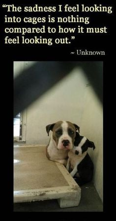 adopt shelter dogs i wish i could adopt every dog please donate www ...