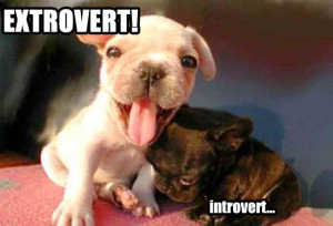 Extroverted you say?