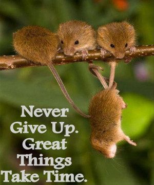 Time Quotes: Never give up. Great things take time…