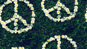 Daisies Background Tumblr Daisy tumblr backgrounds.