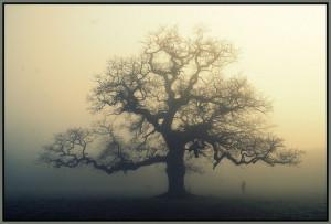 Oak Tree Quotes