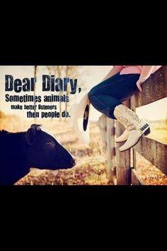 Cow sayings
