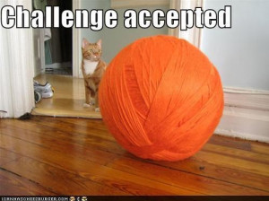 challenge-accepted-cat-ball-funny-picture
