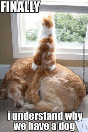 Funny cat and dog pictures