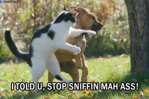 ... Funny Animals , Funny Pictures // Tags: Funny dog and cat fighting
