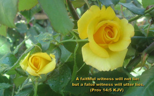 truthful witness does not deceive, but a false witness pours out ...