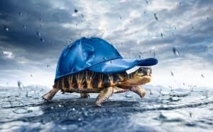Enjoyable Rainy Day SMS Shayaries|Barish Funny Quotes Messages