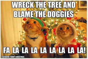What Christmas is like when you have cats!
