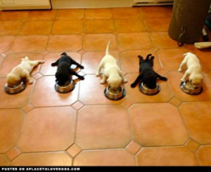 five little puppies dinner time   Show Your Dogs â ¤Dog images, dog ...