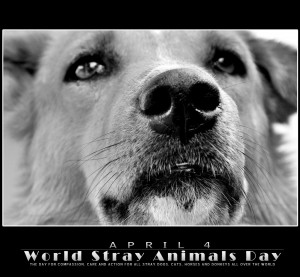 images animal s day quote happy world animal day a world animal ...