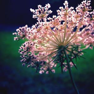 nature_stars_II_by_tangleduptight