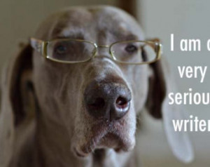 weimaraner humor dog photography 5x 7 - i am a very serious writer ...