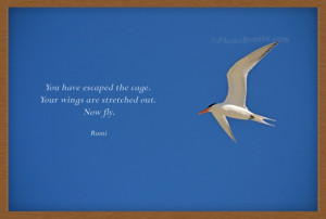 You have escaped the cage. Your wings are stretched out. Now fly.