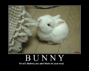 bunny animal motivational poster