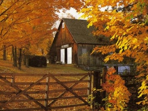 thanksgiving celebrates the fall harvest with god s blessings in ...